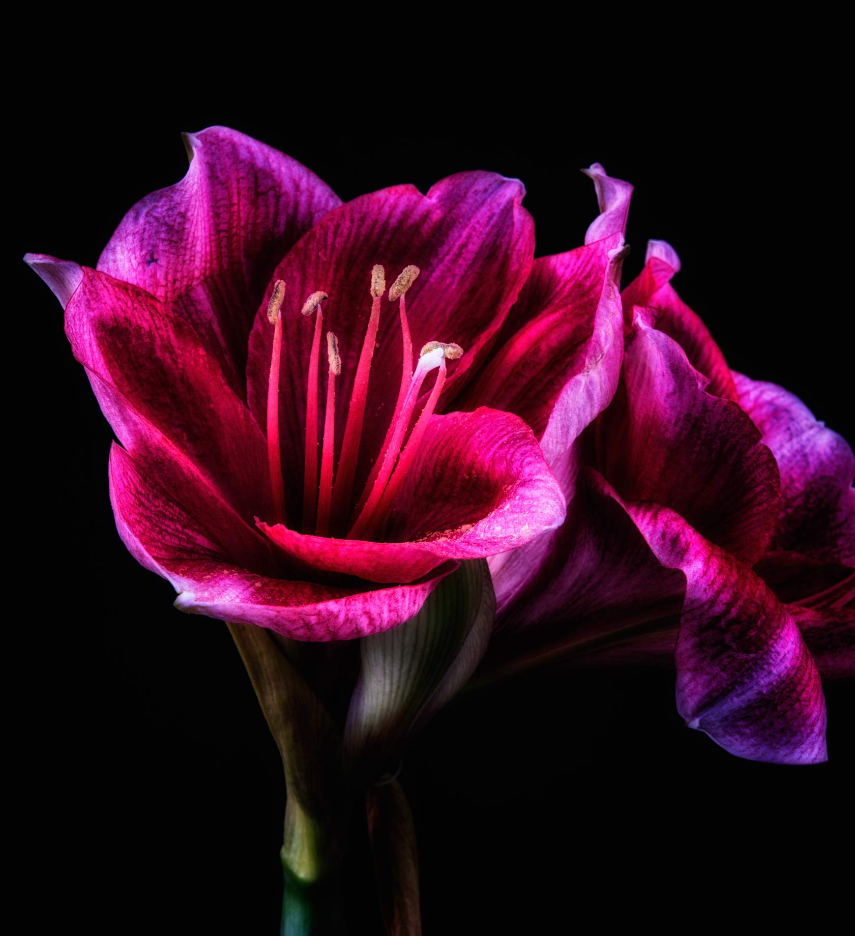 Photograph Fine Art Print of a glowing flower