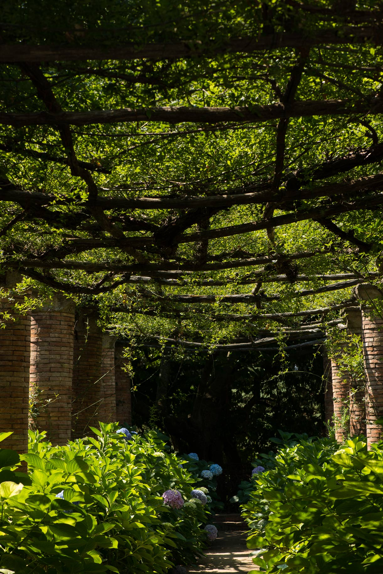 Nature Photography Ravello cloister vine room