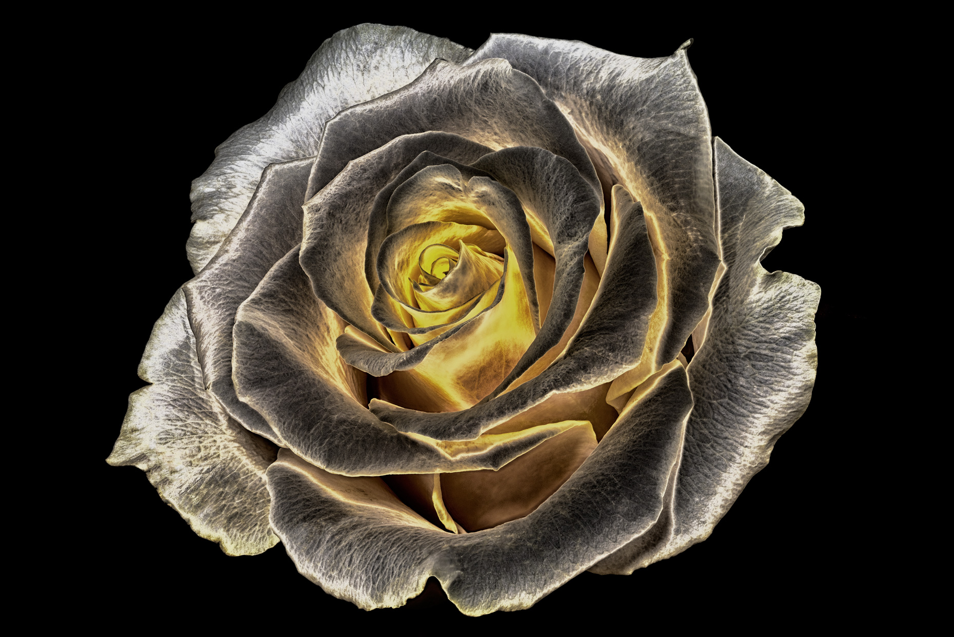 soft-orange-rose-v4-light-dark-contrastweb.jpg