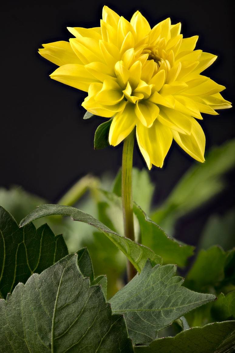 yellow flower with softness